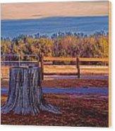 Stump Still Standing Wood Print