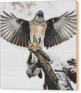 Stumped  Bluejay Wood Print
