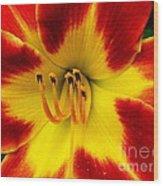 Stunning Daylily  Wood Print