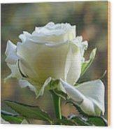 Stunning Rose Wood Print