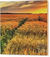 Stunning Sunset Over Cereal Field Wood Print