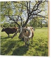 Stunning Texas Longhorns Wood Print