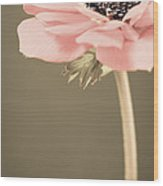 Subdued Anemone Wood Print