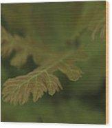 Subtle Green Wood Print