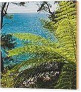 Subtropical Forest Of Abel Tasman Np In New Zealand Wood Print