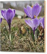 Suburban Spring Wood Print