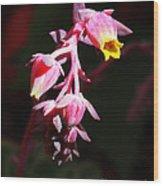 Succulent 1 Wood Print