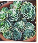 Succulent 13 Wood Print