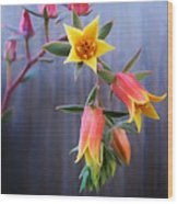 Succulent 23 Wood Print