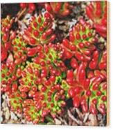 Succulent 3 Wood Print