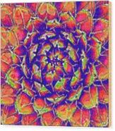 Succulent 7 Wood Print