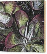 Succulent At Backbone Valley Nursery Wood Print