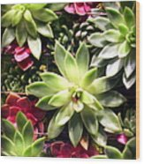 Succulent Beauties Wood Print