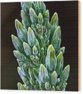 Succulent Bloom Wood Print