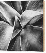 Succulent Curves  Wood Print