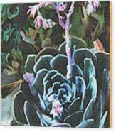 Succulent Flower Caught In A Moonbeam Wood Print