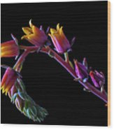 Succulent Flowers On A Stalk Wood Print