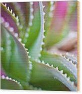 Succulent Swirls Wood Print