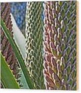 Succulents IIi Wood Print