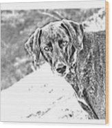 Such A Pretty Girl Wood Print by Peggy Collins