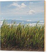 Sugar Cane Field - Maui Wood Print