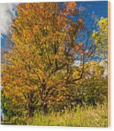 Sugar Maple 3 Wood Print