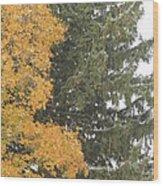 Sugar Maple And Evergreen Wood Print