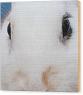 sugar the easter bunny 1 -A curious and cute white rabbit close up Wood Print