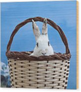 sugar the easter bunny 4 - A curious and cute white rabbit in a hand basket  Wood Print