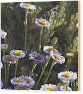 Suisun Marsh Aster In The Morning Light Wood Print