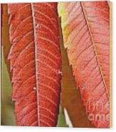 Sumac Leaves Wood Print