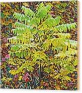 Sumac Leaves In The Fall Wood Print