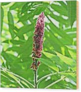 Sumac Wood Print