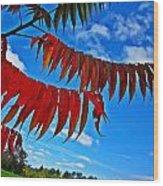 Sumac Red Wood Print
