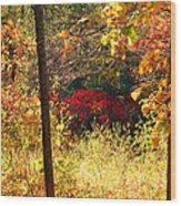 Sumac Treasure Wood Print by James Hammen