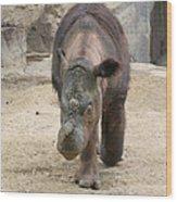 Sumatran Rhinoceros  Wood Print
