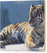 Sumatran Tiger 7d27276 Wood Print by Wingsdomain Art and Photography