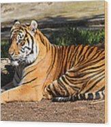 Sumatran Tiger 7d27310 Wood Print by Wingsdomain Art and Photography