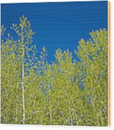 Summer Aspens Wood Print