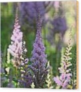 Summer Astilbe Wood Print