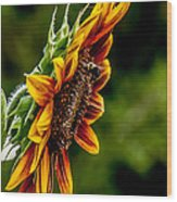 Summer Beauty Wood Print