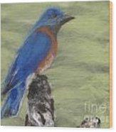 Summer Blue Bird Wood Print