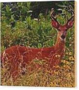 Summer Buck Wood Print