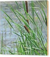 Summer Cattails In The Breeze Wood Print