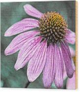 Summer Conedlower Wood Print