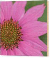 Summer Coneflower Wood Print