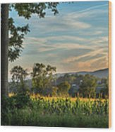 Summer Corn Square Wood Print by Bill Wakeley