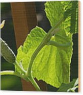Summer Cuke Wood Print