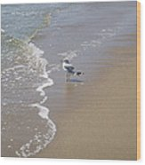 Summer Day Of A Gull 2 Wood Print