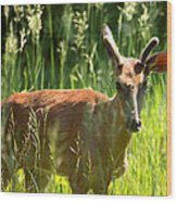 Summer Deer Wood Print